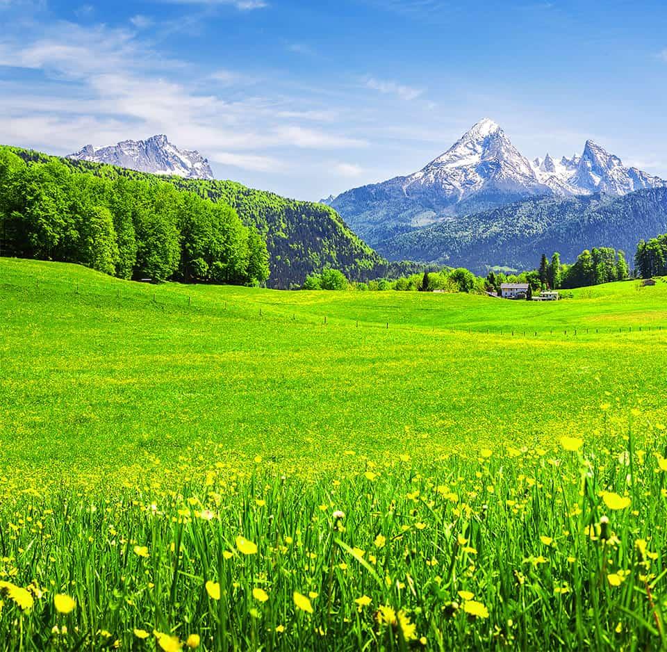 svájci gyógynövények